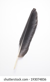 An image of Feather