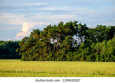 Image of a field with trees an blue sky with clouds in Bavaria, Germany