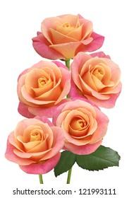 image of five pink roses closeup