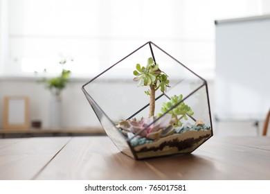 Image of florarium with succulent stones