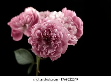 image of flower dark background
