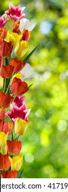 image of flowers in the garden close up