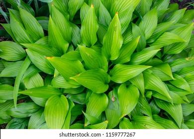 Image of Foliage