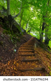 Image of a forest path