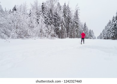 Image of the forest in winter. Winter landscape in the forest. Flying over ski track in winter forest. Top down view of ski road. Drone follow the girl skier at ski track. Cross-country skiing