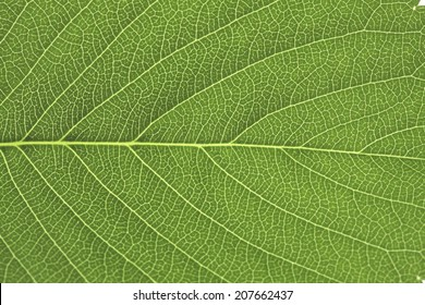 An Image of Fresh Green Leaves