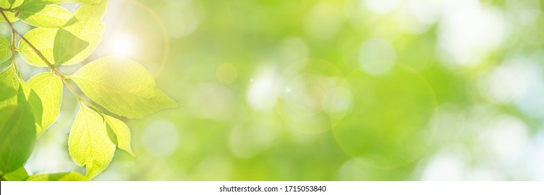 Image of fresh green season (yellow-green leaves that have sprouted newly), bright future, new start, happiness, etc.