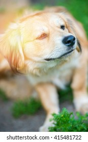 An image of funny dog portrait