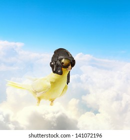 Image of funny parrot in funny hat