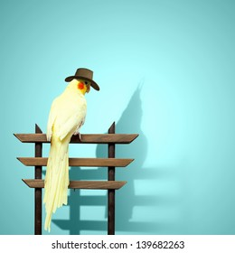 Image of funny yellow parrot wearing hat
