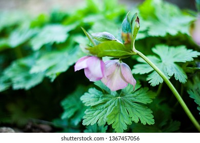 Image of garden flowers close up. With blurred background.