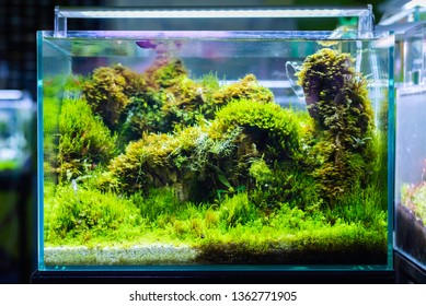 image of the glass aquarium tank with water plants and has a bright LED lamp on top.