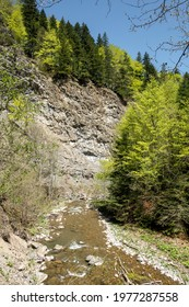 Image from the gorges of Tișița river, Vrancea mountains, Romania