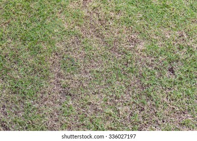 Image of grass field background.