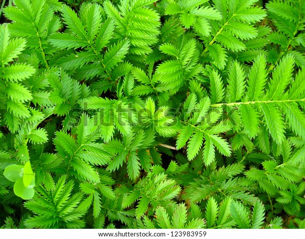 Image Green Background Nice Fresh Leaves Stock Photo (Edit
