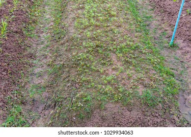 image of green celery growing on farmland.