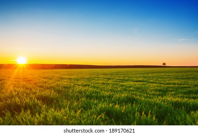 Image of green grass field and blue sky