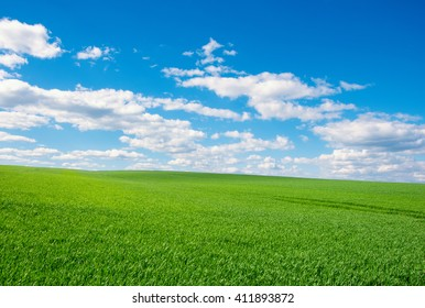 Image of green grass field and bright blue sky