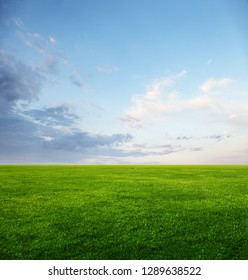 Image of green grass field and light blue sky with copyspace