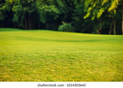 Image of green grass and forest, selective focus. Relax concept.