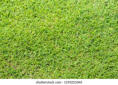 image of green  grass texture taken from the top view .