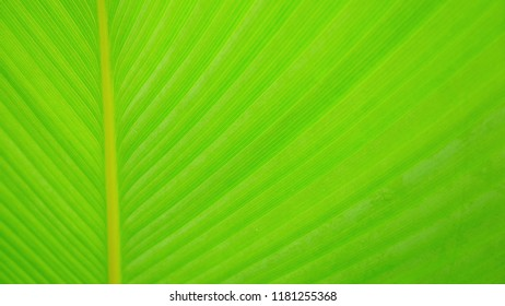 The image of green leaf texture closeup for background, tree with bright light.