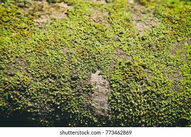 Image of green natural texture background