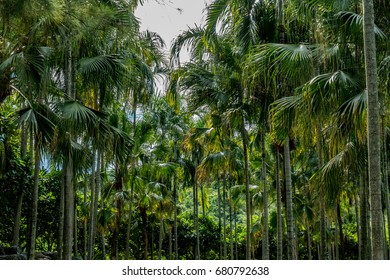 Image of Green palm trees with blue sky background