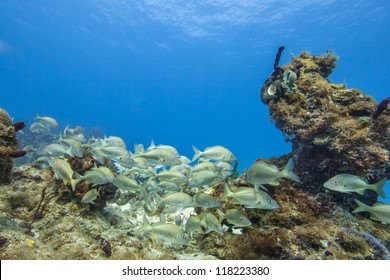 Image of group of fish on coral reef colonies