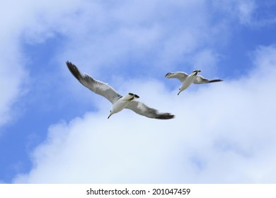 An Image of Gull