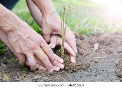 Image of hands of father and daughter growing tree on soil. Parent and child planting nature together : World environment day reforesting eco bio arbor CSR ESG ecosystems reforestation concept