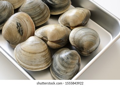Image of hard shell clam