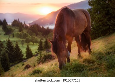 Image of a horse grazing in a pasture illuminated from behind by the warm light of a sunrise in the mountains