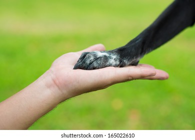 Image of a human hand holding a dog's paw