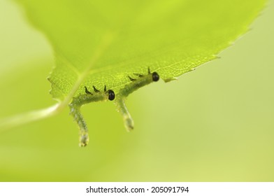 An Image of Insect
