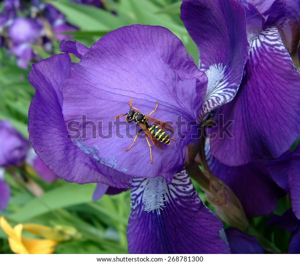 image-insect-sitting-on-dark-600w-268781