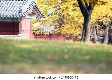 The Image of Korean Palace in Autumn
