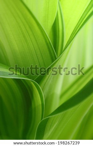 An Image of Leaf