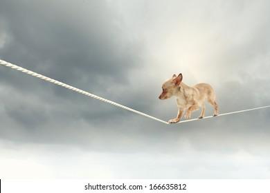 Image of little dog balancing on rope