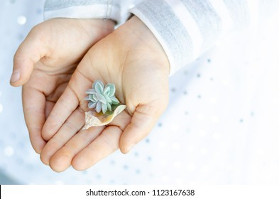 An image of a little girls hands, where she is holding a new succulent, growing out of an old succulent leaf.