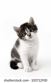 An image of little kitten on neutrall background