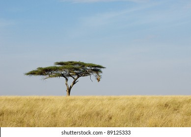 Image of a lonely acacia tree in Serengeti