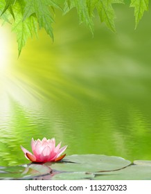 image of a lotus on the water on a green background