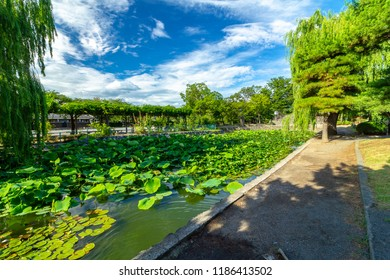 Image of A lotus and water lily of the pond of the Matsumoto-jo Castle  in Matsumoto-shi, Nagano. Shot from the  pond of the Matsumoto-jo Castle west.