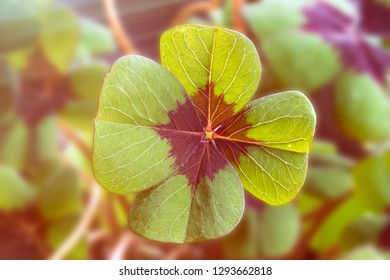 Image of lucky clover with sunlight and sunbeams