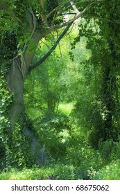 Image of a lush green forest