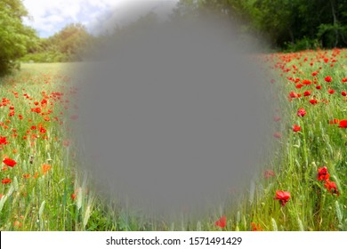 An image of a macular degeneration poppy field nature