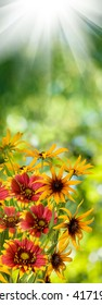 image of many flowers in the garden closeup