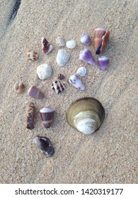 image of the misc sea shells laying on the white sand beach