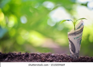 Image of money bank notes with plant growing on top for business,growing,saving, economic concept isolated natural backdrop,Free copy space